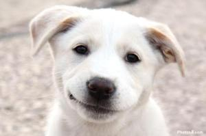 Smiling_Dog_Face